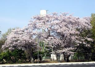 f:id:mikawakinta63:20110410155210j:image