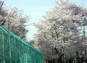 f:id:mikawakinta63:20110410155415j:image