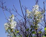 f:id:mikawakinta63:20110413142314j:image