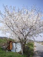 f:id:mikawakinta63:20110415095009j:image
