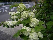 f:id:mikawakinta63:20110430142820j:image