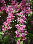 f:id:mikawakinta63:20110510084304j:image
