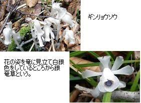 f:id:mikawakinta63:20110527173110j:image:right