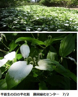 f:id:mikawakinta63:20110702201510p:image:left