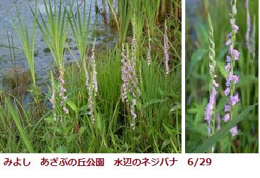 f:id:mikawakinta63:20110704194657p:image:left