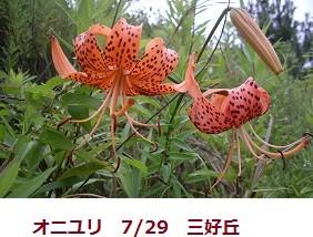 f:id:mikawakinta63:20110729063637j:image:left