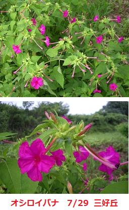 f:id:mikawakinta63:20110730213458p:image:right