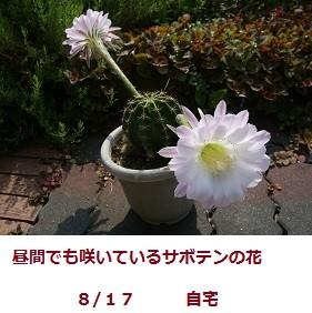f:id:mikawakinta63:20110817095146j:image:left