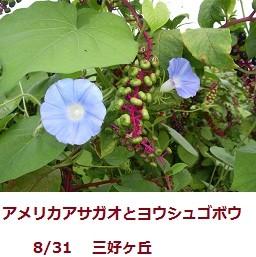 f:id:mikawakinta63:20110831065220j:image:right