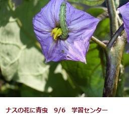 f:id:mikawakinta63:20110906110905j:image:left