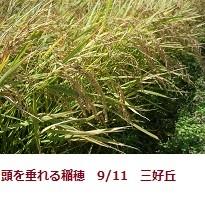f:id:mikawakinta63:20110908131648j:image:right