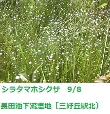 f:id:mikawakinta63:20110908132402j:image:left