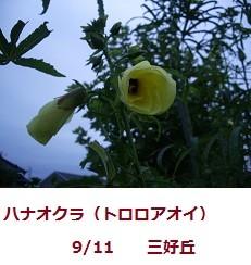 f:id:mikawakinta63:20110909060902j:image:left