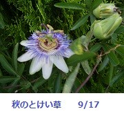 f:id:mikawakinta63:20110917173928j:image:right