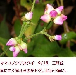 f:id:mikawakinta63:20110918064044j:image:left