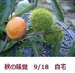 f:id:mikawakinta63:20110918070044j:image:left