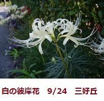 f:id:mikawakinta63:20110924151223j:image:right