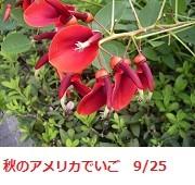 f:id:mikawakinta63:20110925112851j:image:left