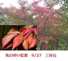 f:id:mikawakinta63:20110929112155p:image:right