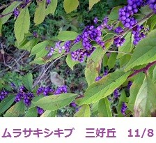 f:id:mikawakinta63:20111102091924j:image:left