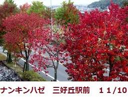 f:id:mikawakinta63:20111110134242j:image:right