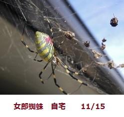 f:id:mikawakinta63:20111115094625j:image:left