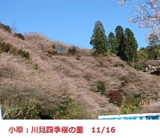 f:id:mikawakinta63:20111116102839j:image:left