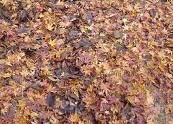 f:id:mikawakinta63:20111117144851j:image:left