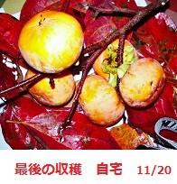 f:id:mikawakinta63:20111120085112j:image:right