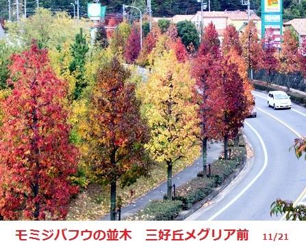 f:id:mikawakinta63:20111121141314j:image