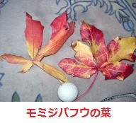 f:id:mikawakinta63:20111121145049j:image:left