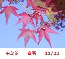 f:id:mikawakinta63:20111122134157j:image:right