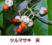 f:id:mikawakinta63:20111123103745j:image:left
