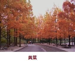 f:id:mikawakinta63:20111123104840j:image:left