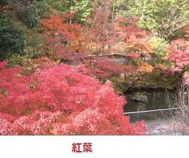 f:id:mikawakinta63:20111123112100j:image:right