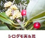 f:id:mikawakinta63:20111123115834j:image:right
