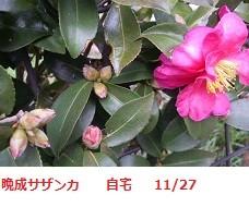 f:id:mikawakinta63:20111127142218j:image:left