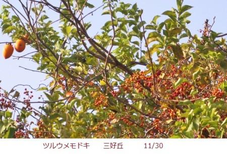 f:id:mikawakinta63:20111130090824j:image