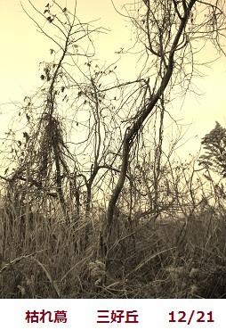 f:id:mikawakinta63:20111221091026j:image:left