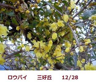 f:id:mikawakinta63:20111228090915j:image:left