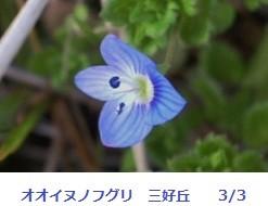 f:id:mikawakinta63:20120303095451j:image:left