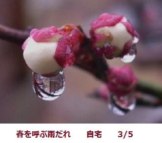 f:id:mikawakinta63:20120305141017j:image:right