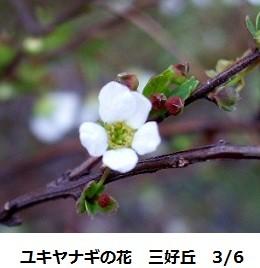 f:id:mikawakinta63:20120306103717j:image:right