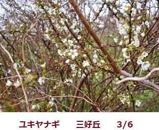 f:id:mikawakinta63:20120306103750j:image:left