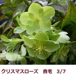 f:id:mikawakinta63:20120307102348j:image:left