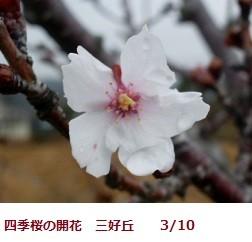 f:id:mikawakinta63:20120310091807j:image:left