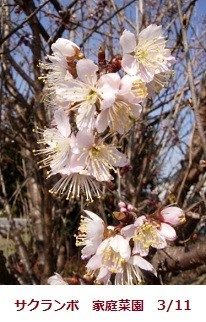 f:id:mikawakinta63:20120311100523j:image:right