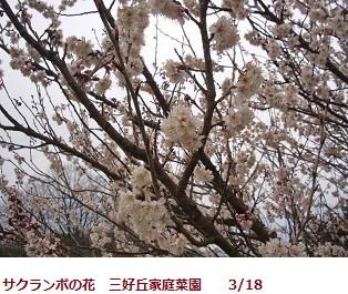 f:id:mikawakinta63:20120318103316j:image:right