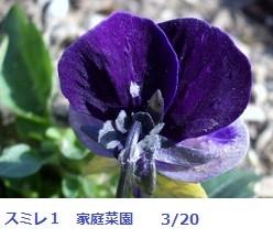 f:id:mikawakinta63:20120320093818j:image:left