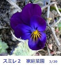 f:id:mikawakinta63:20120320101250j:image:right
